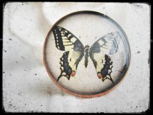 butterfliesring_art55a
