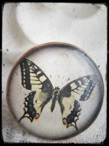 butterfliesring_art55c
